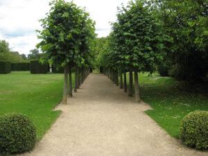 Blick auf eine der beiden langen Linden-Alleen im formalen Garten von Coughton Court