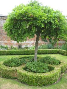 Early Summer Garden mit Wisteria und Paeonien in Coughton Court