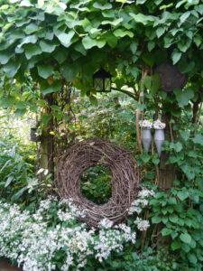 Eurybia divaricata im Waldgarten Amanda Peters